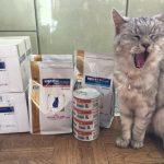猫の腎臓療法食 いつもと違うのも買ってみた|ロイヤルカナンとヒルズ 《動画あり》