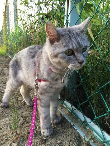 お散歩大好きな猫を公園のブランコに乗せてみた結果