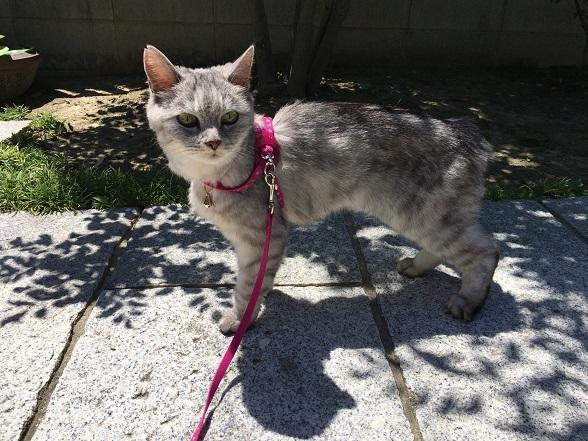 真夏の真昼間に散歩に連れだされた猫のとった行動