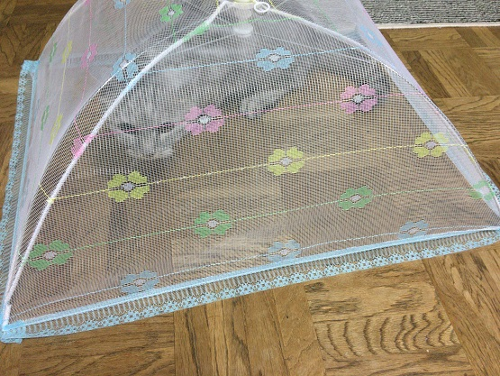 テーブルに乗る猫にフードカバーをかけたら