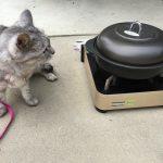 猫と散歩に出たら駐車場で石焼芋
