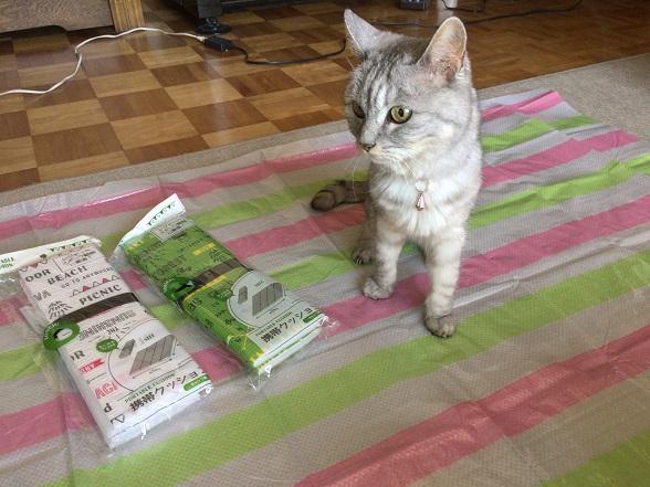 レジャーシートON猫