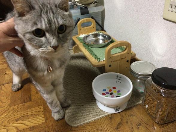 ロイヤルカナン腎臓サポート☆セレクションよりスペシャルにがっつく猫