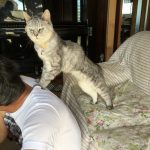 肩もみ、、、しそうでしない猫