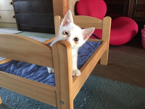 さらに1匹猫が増えた猫おばさんちに行ってきた