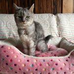 新調したお値段以上の冬用猫ベッドでふみふみする猫