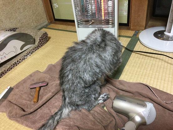 猫・お風呂・落ちる