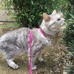 猫のマイブーム→裏庭は臭いの宝庫