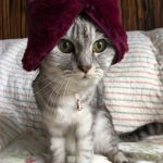 猫のコスプレ?ダイソーの桂由美にゃ