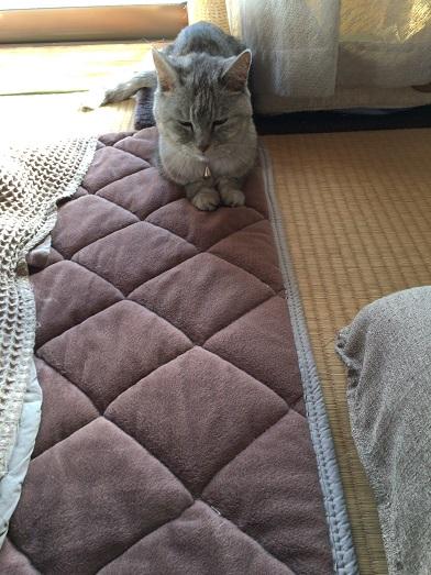 ひとり「だるまさんがころんだ」する猫