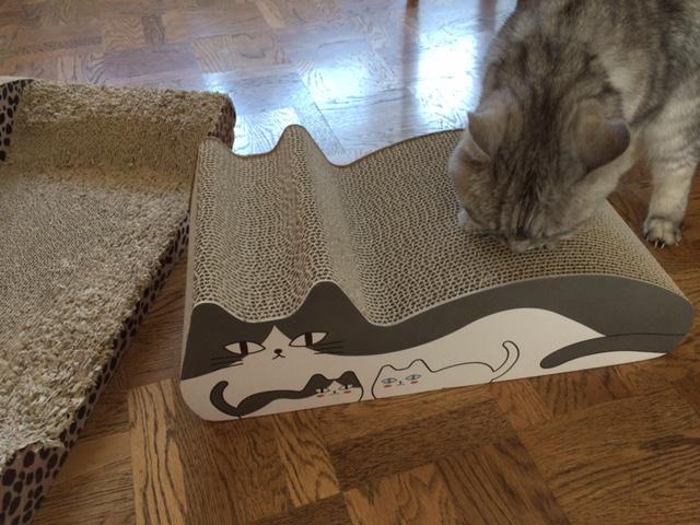 新しいねこ型(置き型)爪とぎをどスルーする猫