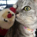 猫とサンタの指人形 もうクリスマスだ!
