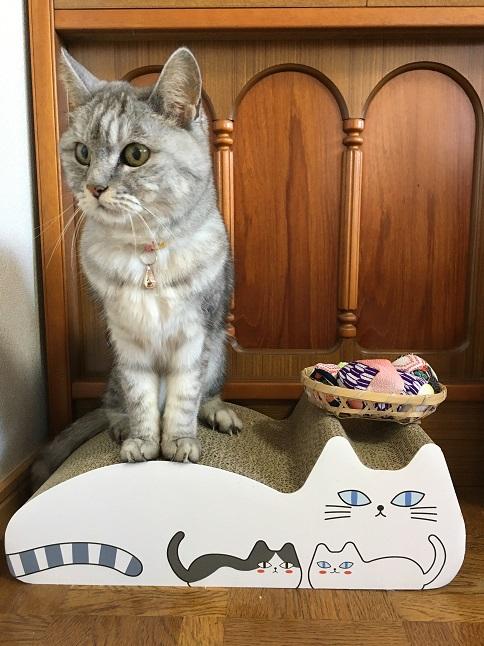 猫には懐かしくないお手玉&おくるみミル