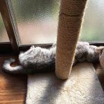 爪とぎのふもとで昼寝する猫