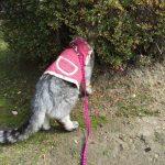 <追記・動画あり>寒い中服を着ても震えながらキウイの根を舐める猫