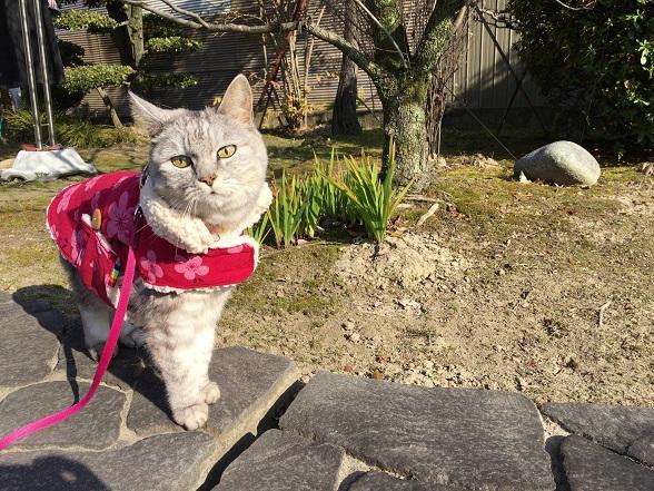 買ったばかりのコートを着て猫おばさんちに行ってきた