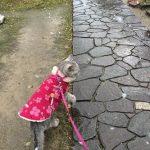 雪の中「散歩に行く」って猫が言うから連れて行った結果