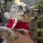 シニア猫の便秘 4日でやっと出ましたの報告