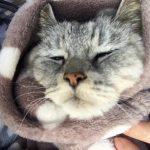 シニア猫の便秘 もう3日うんち出ていない;