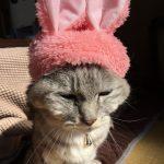 猫トイレにうさぎが!~猫かぶりもの ガチャ ねこうさぎちゃんスイーツカラー~