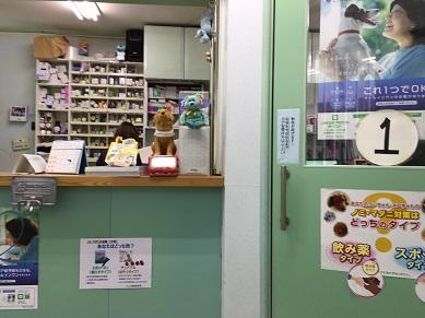 シニア猫が赤茶色の胃液吐いて受診、次は膀胱炎?!