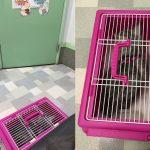 猫が1日2度吐いたので肝臓のその後を診ながら動物病院受診