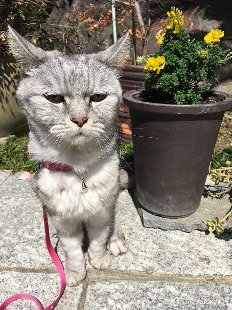 ひさびさ猫おばさんちまで散歩&やっぱりミルへん