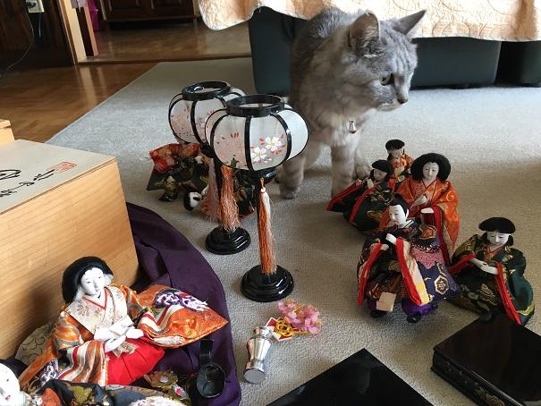 【ここ数日の猫と飼い主】ひな人形しまう→寝込む→洗う