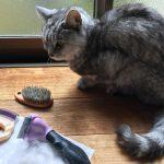 『ミルお世話デー』夏が換毛期の猫なのに春にキターー