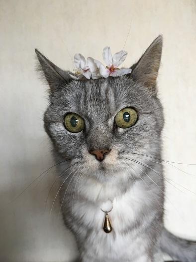 猫と桜のかんむり '2018