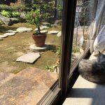 午前と午後の猫の居場所と最近の胃液事情とさらに見つけた動物病院