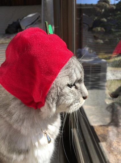 【猫かぶりもの】ガチャ☆かわいいかわいいねこフルーツちゃん|りんごとメロン