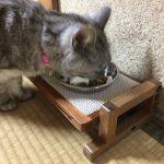 necoco(ネココ)ウッディキャットテーブル(ダイニングテーブル・食器台)はシニア猫におすすめ