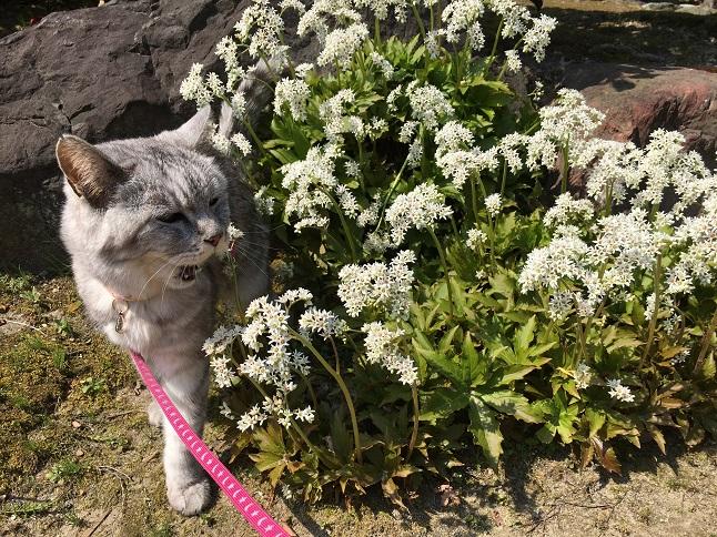 『猫と春の花撮影』モデルも楽じゃないのよ