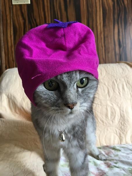 【猫かぶりもの】ガチャ☆かわいいねこ野菜ちゃん(なす)と&サンリオキャラクターズ(シナモロール)