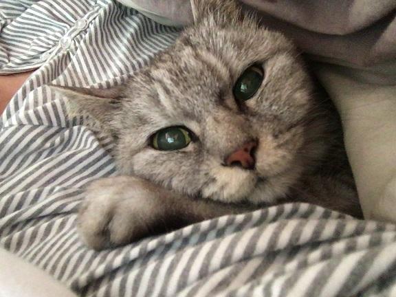 腕枕で眠る猫&薬だけ貰いに行ってきた