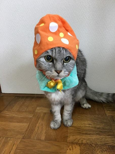 【猫かぶりもの・ガチャ】かわいい ねこイースターちゃん◇オレンジ