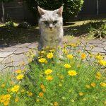 今年も黄色い花と猫