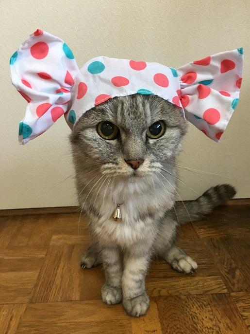 ※追記あり【猫かぶりもの】かわいいキャンディちゃん と言ってる場合でない白内障かも!