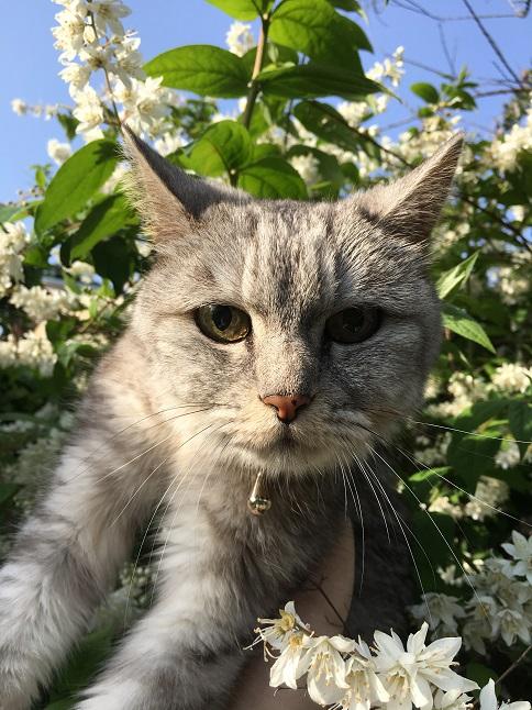 蔵出しの散歩猫