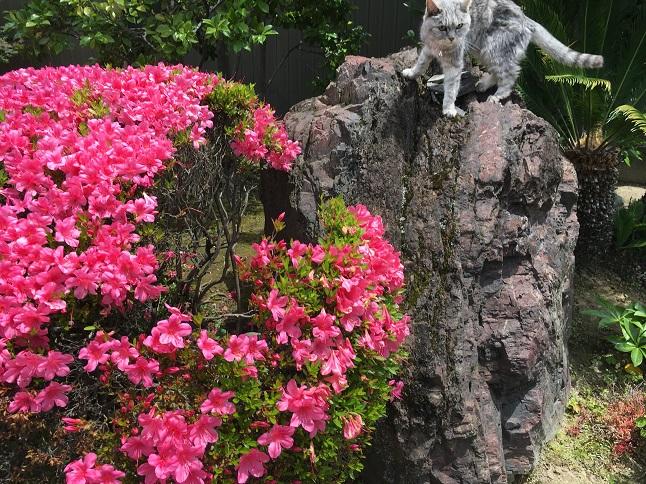 【お知らせあり】梅雨入り前の猫の散歩