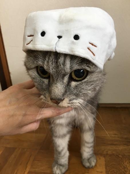 【猫かぶりもの・ガチャ】かぶって!マリンあにまる◇あざらしくん