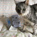 可愛い猫缶に入ったお菓子 食べた後もフル活用♪