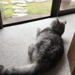 猫がおしっこしないので動物病院受診◇肝臓の数値が正常に!