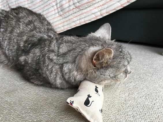 キッカーにあごを預けて眠る猫