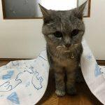 夏の掛け布団と老猫の爪問題