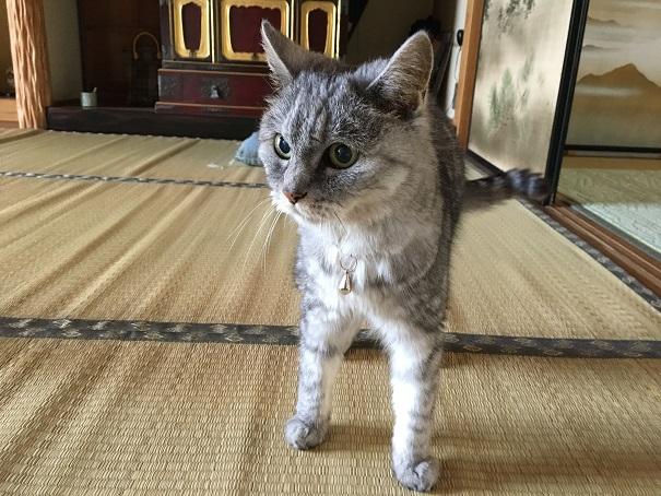 ひさびさの場所で見た猫とひさびさの散歩