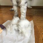 靴下を脱いだ猫