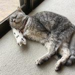熱波!酷暑の中 大福のような顔をして昼寝する猫