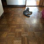 酷暑につき落ちる場所を選んで落ちている猫